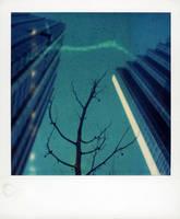 Polaroid Tree In The City by lloydhughes