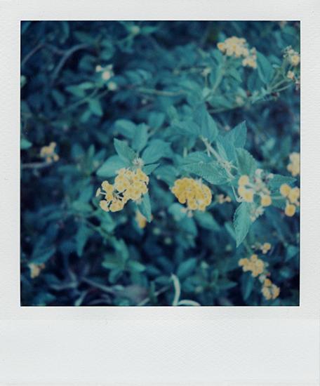 SX-70 polaroid 99 of 100 by lloydhughes