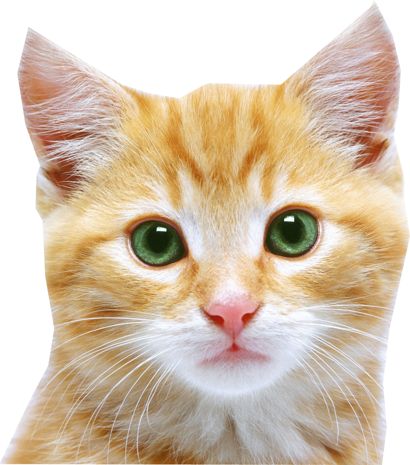 Cat Pictures Transparent Background
