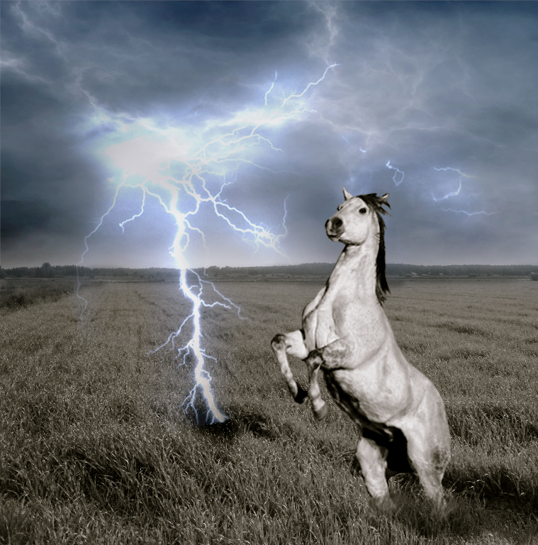 horse rearing at lightning by 97goodwintoby on DeviantArt