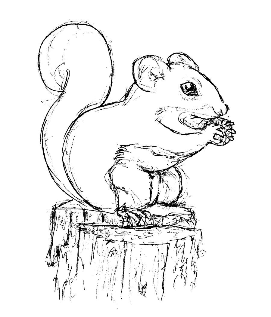 Squirrel sketch by bluefootednewt on deviantart for Coloring page of a squirrel