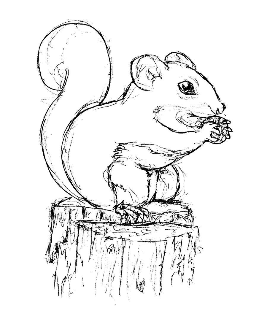Line Drawing Squirrel : Squirrel sketch by bluefootednewt on deviantart