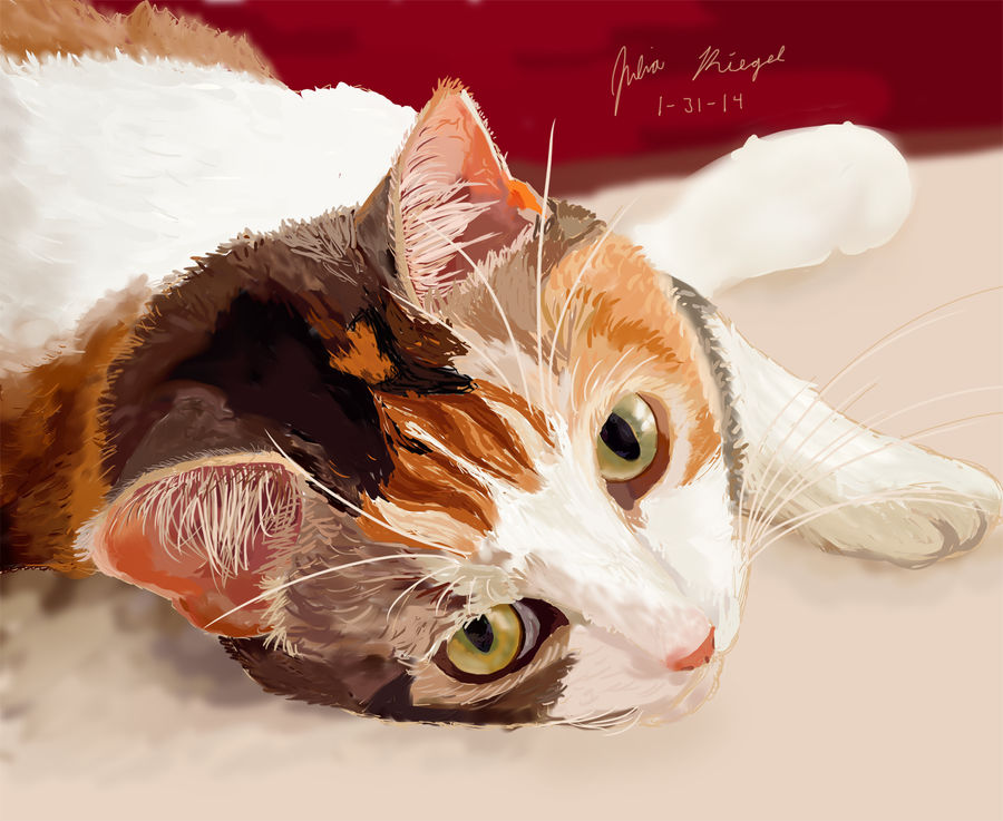 Relaxing Calico Kitty
