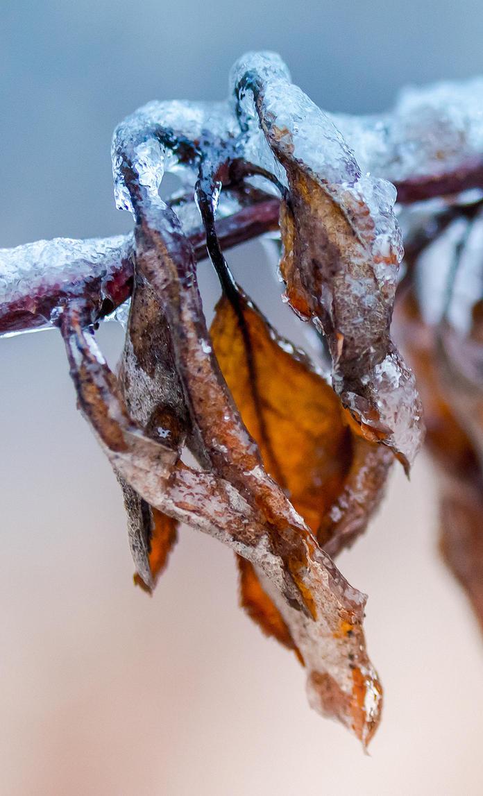 Winter Beauties 4 by thenSir
