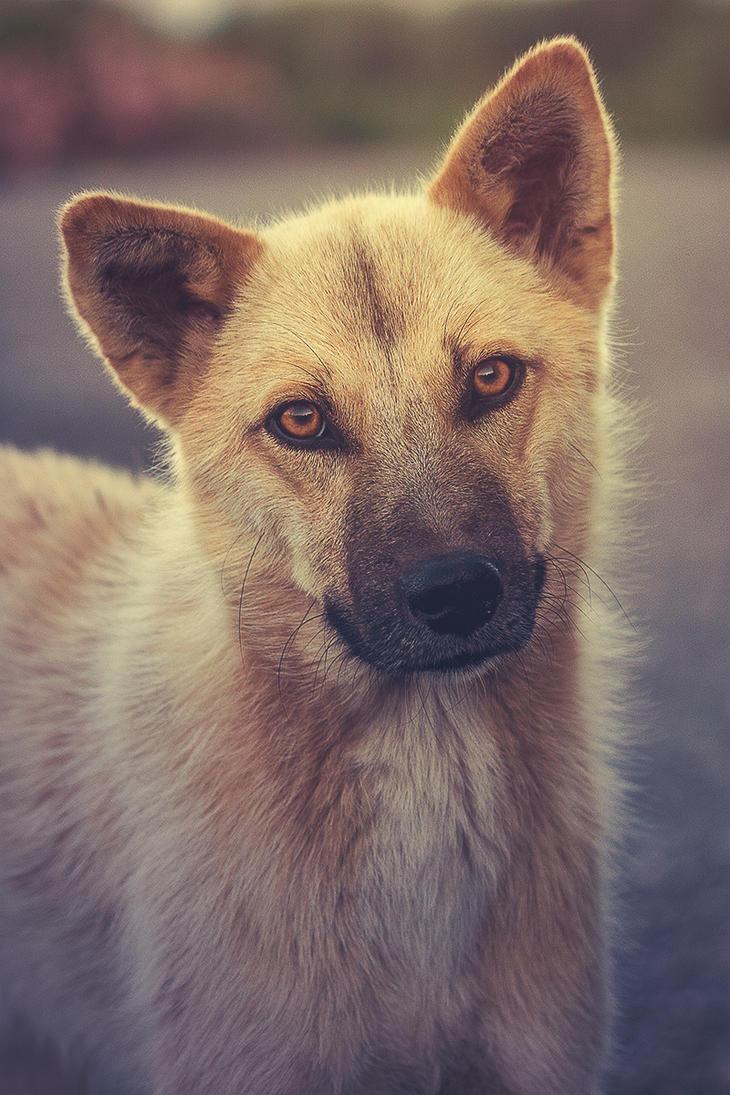 Doge? by thenSir