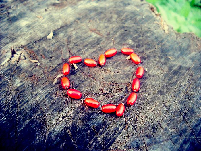 Heart by untouchedgirl