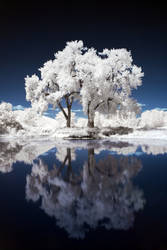 Two Trees IR by vazagothic