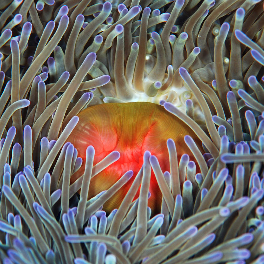 Sea Anemone by vazagothic on DeviantArt