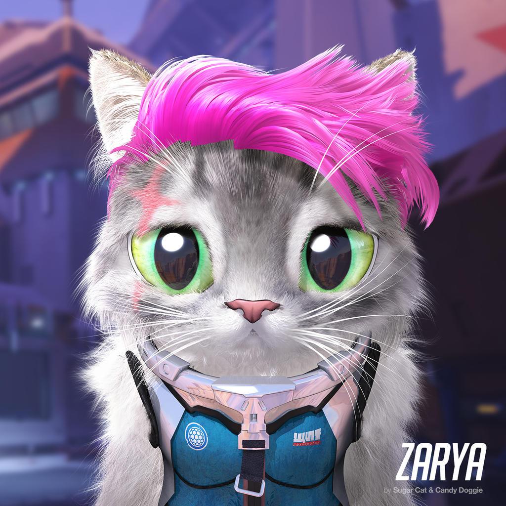 Zarya cat