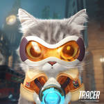 Tracer cat