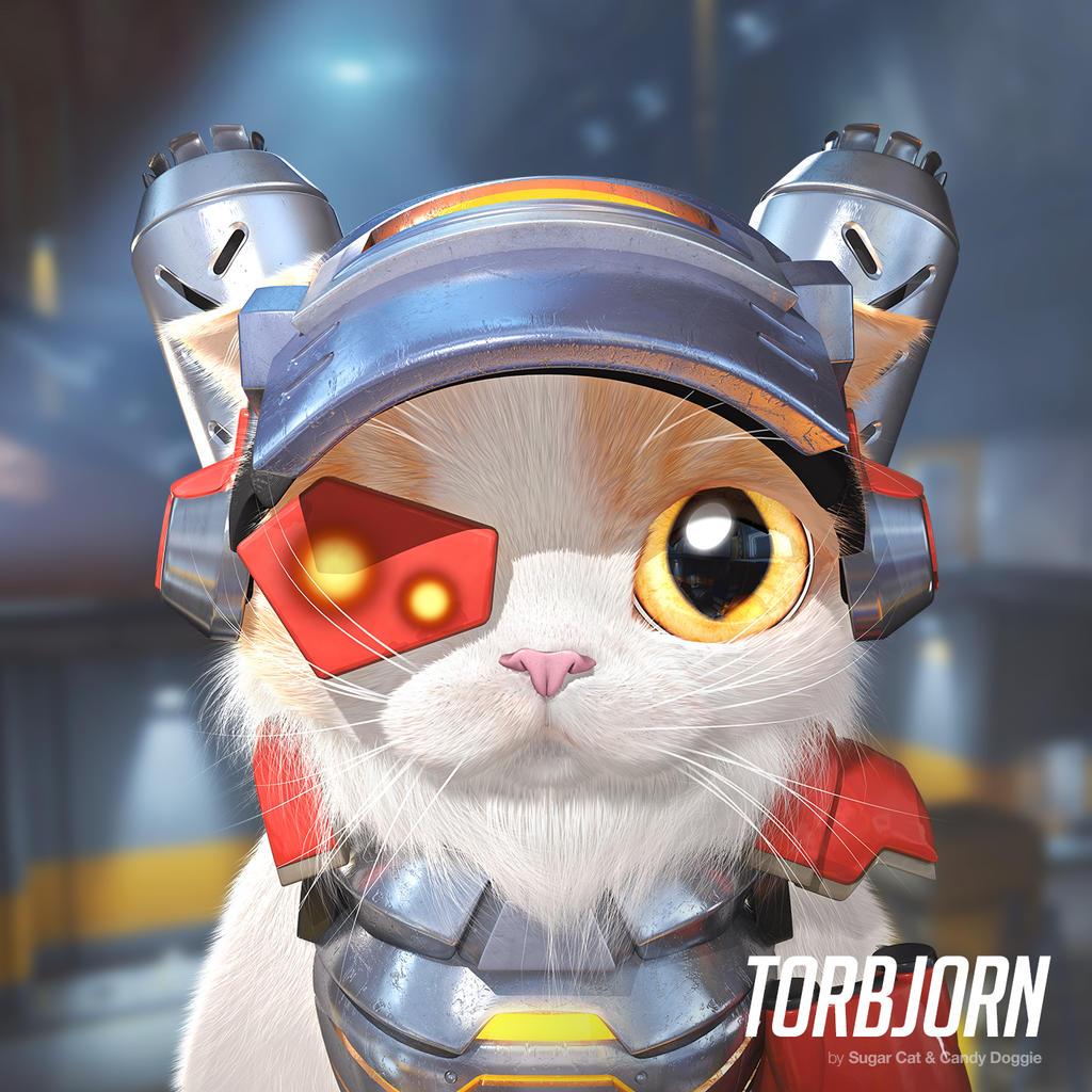 Torbjorn cat