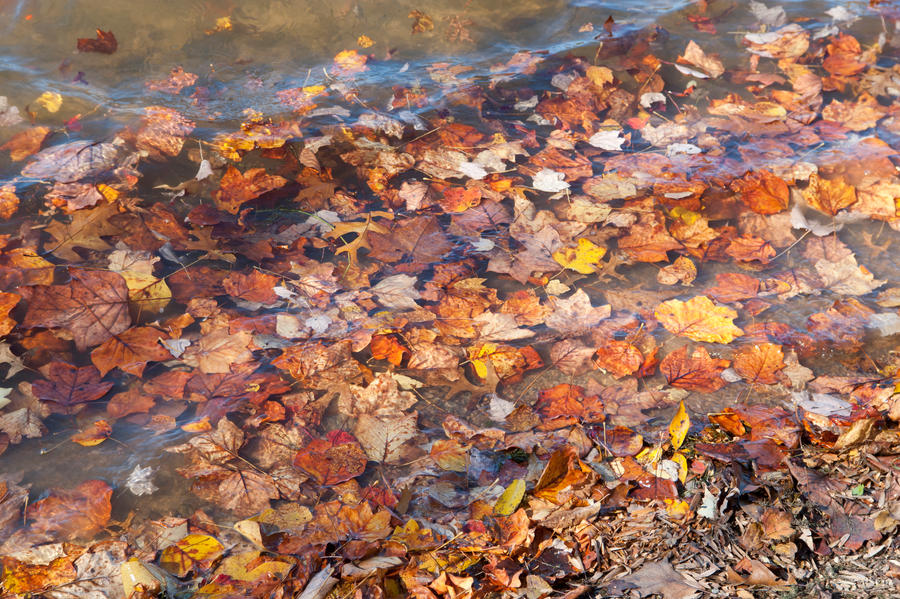 Autumn waters by snaphappy101