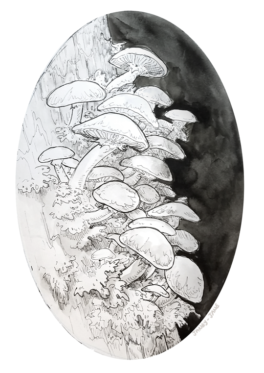 Mushrooms by janey-jane