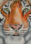 ATC: Siberian Tiger
