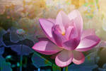 Lotus with background by Tackon