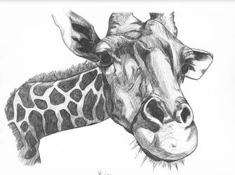Girafe by rionma