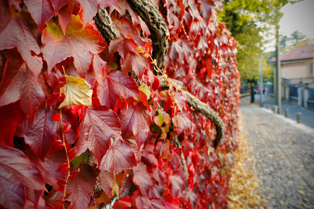 Wall Art Red Leaves : Red leaves on the wall by persianpop deviantart