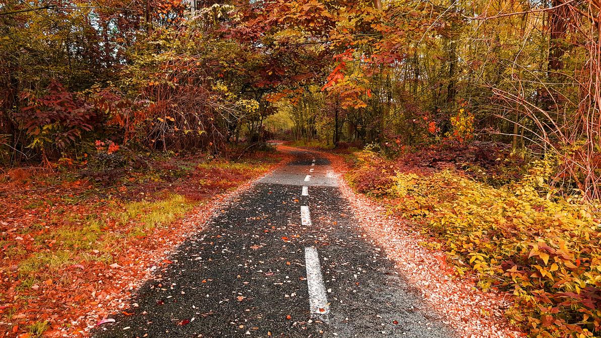 The Autumn Fallen Road... by persianpop