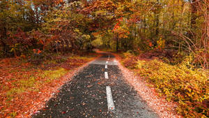 The Autumn Fallen Road...