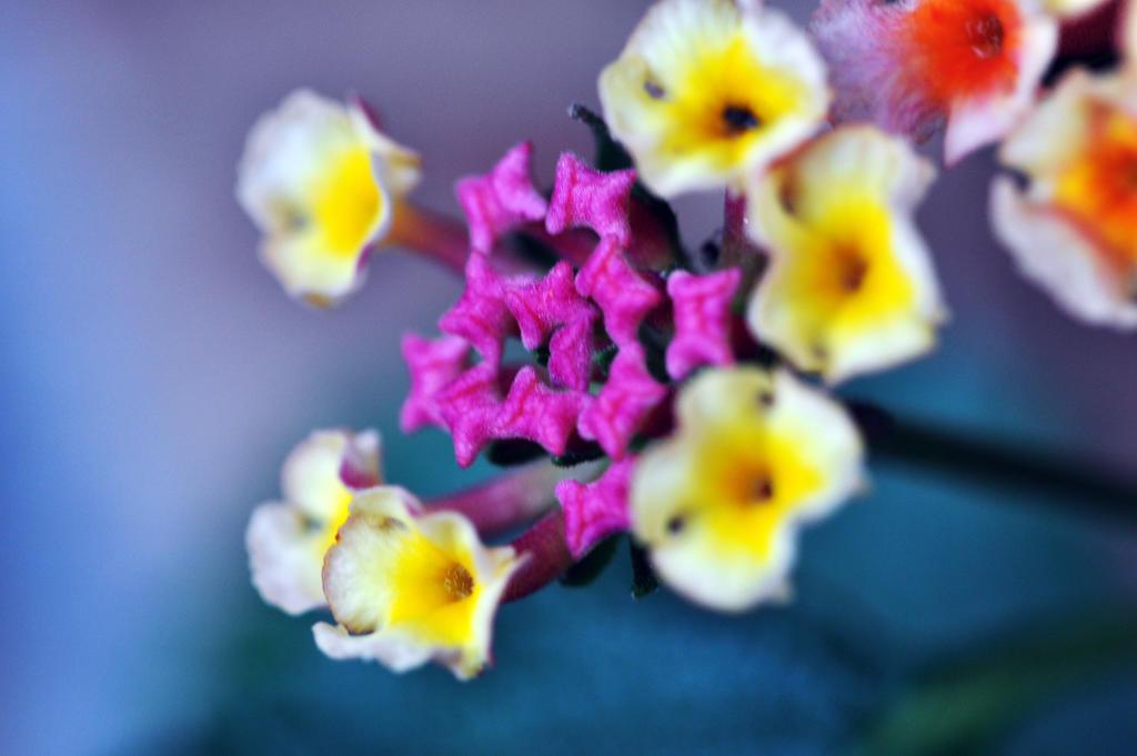Colors by qui3ton3