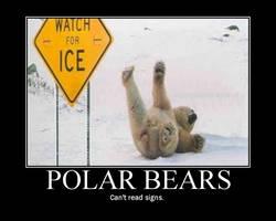 Polar bear motivator by danzilla3