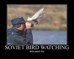 Bird Watching Motivator by danzilla3