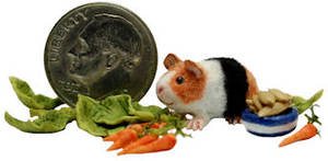 FURRED GUINEA PIG CAVY PET BABY ANIMAL