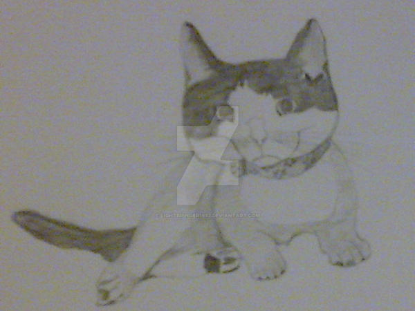My cat Noodles - sketch 01 by Lightbringer1992