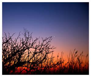 Bush at dawn by java4folks