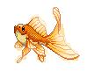Goldfish by SkyLandWarrior