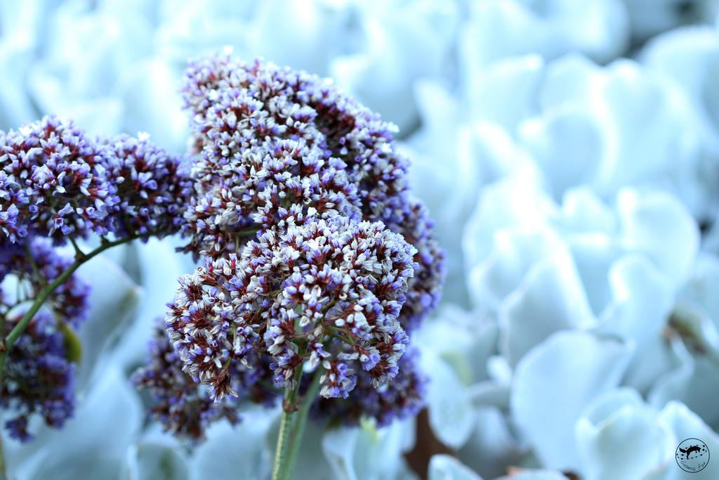 'Flora Snow' by Cosmicf0x