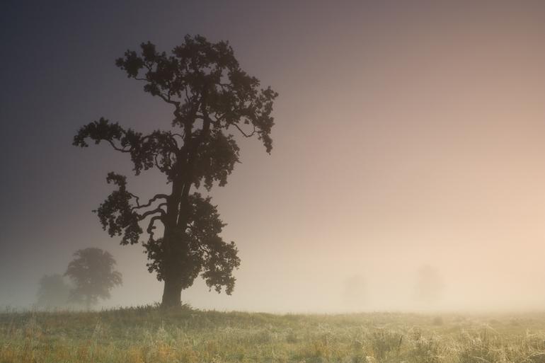 Fog by anoru