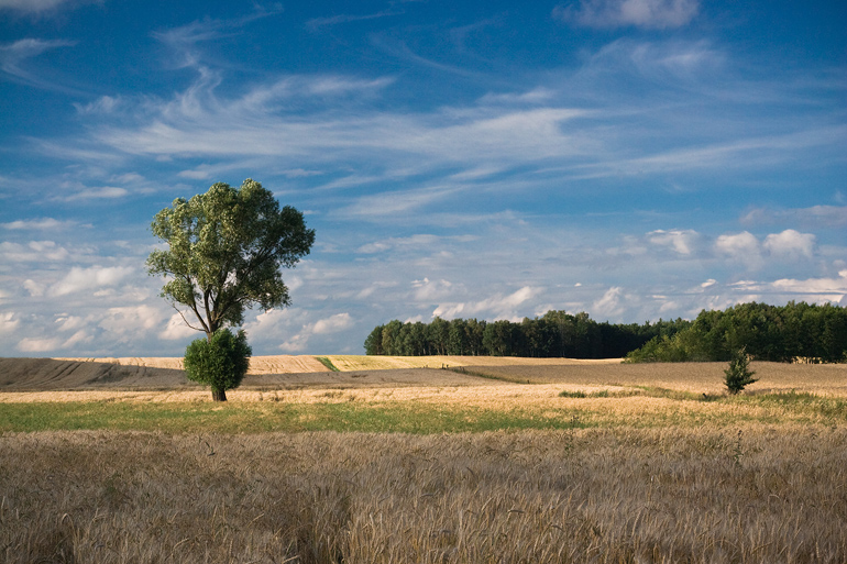 Polish Landscape by anoru