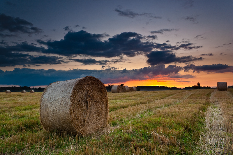 Polish Landscape III by anoru