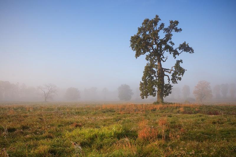 Polish Landscape V by anoru