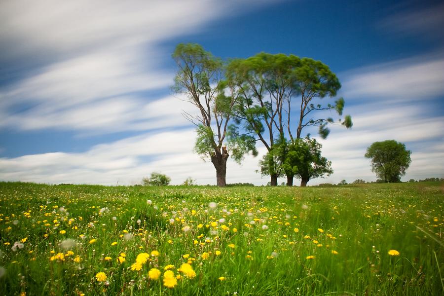 Spring landscape by anoru