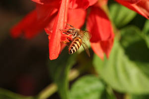 busy bee2 by freestyler-87