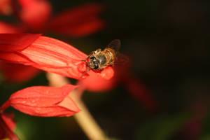 honey bee2 by freestyler-87
