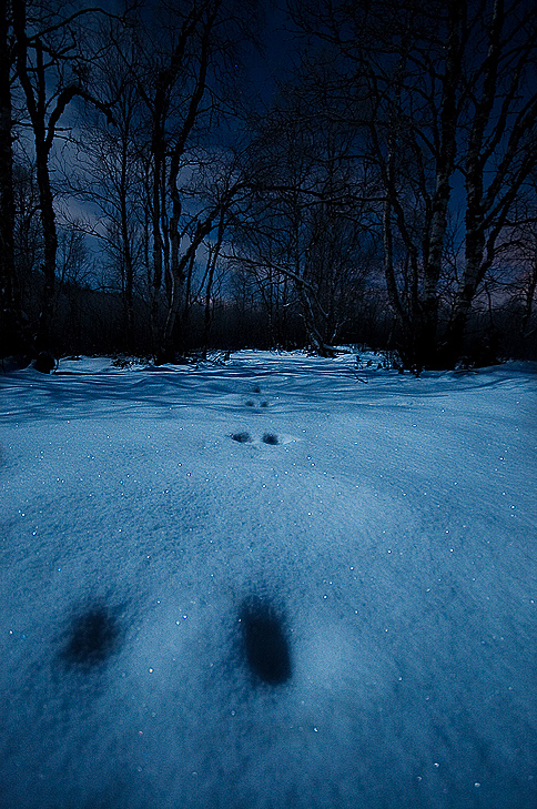 Tracks in the moonlight... by uberfischer