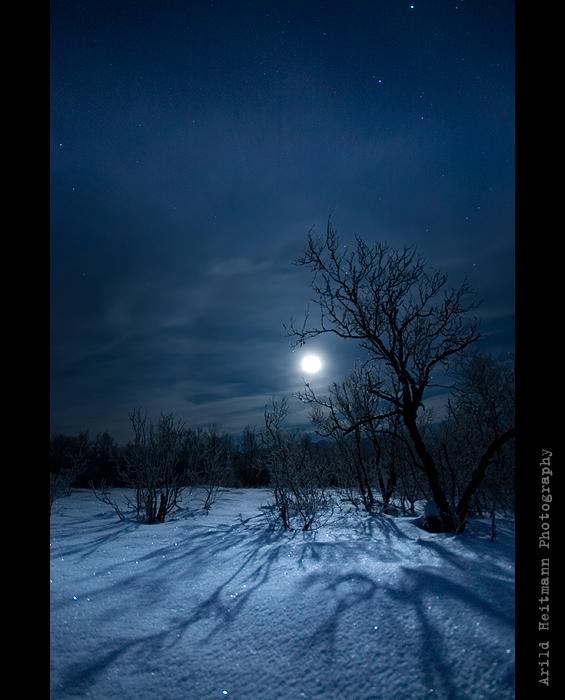 Full Moon Fever... by uberfischer
