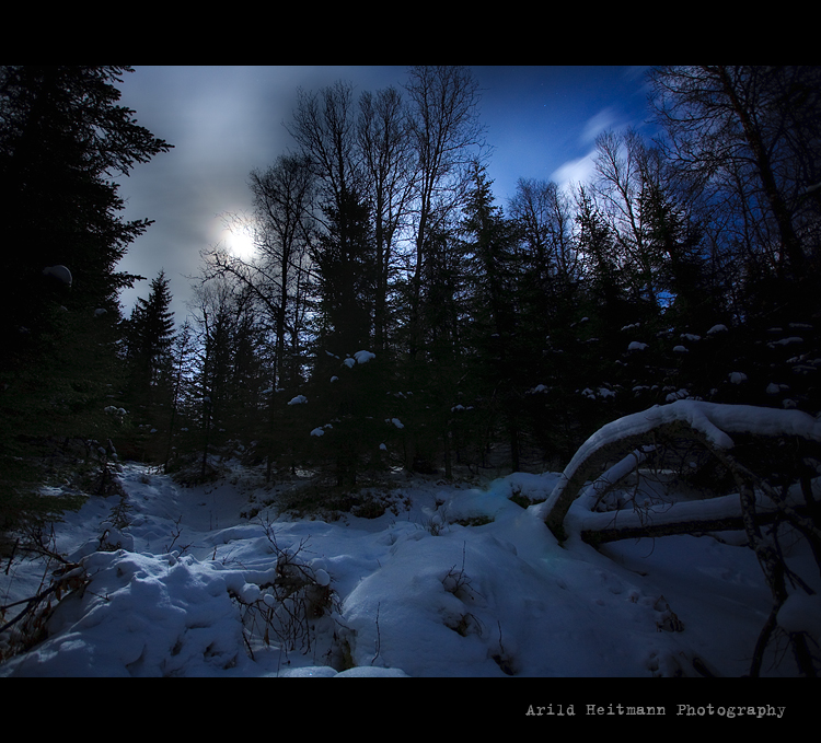 Moon in the woods by uberfischer