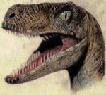 Age-12 Raptor