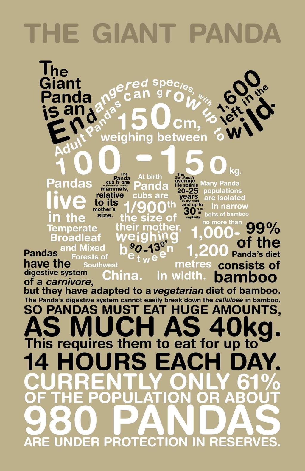 Panda Infographic by Lish-55