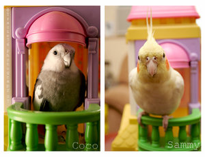 Cute birds by Udry