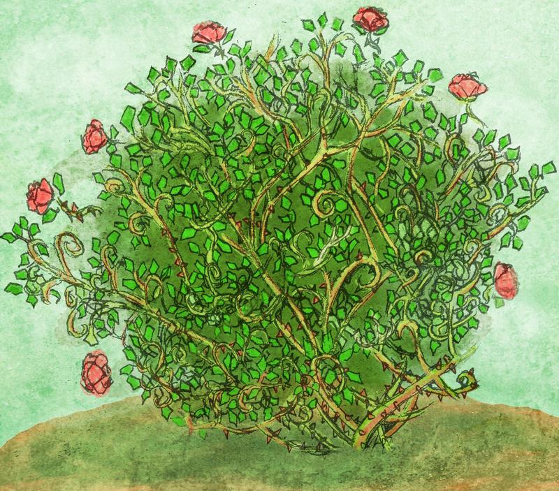Rose Bush by Missy-fae