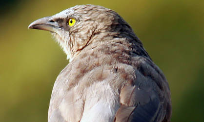 bird by himphotography