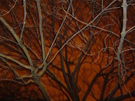 Scary Tree 1