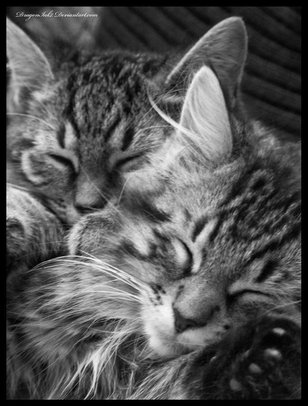 Sleeping Babies by DragonInk7