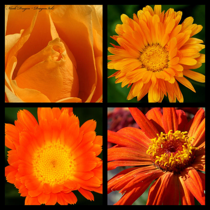 Orange by DragonInk7
