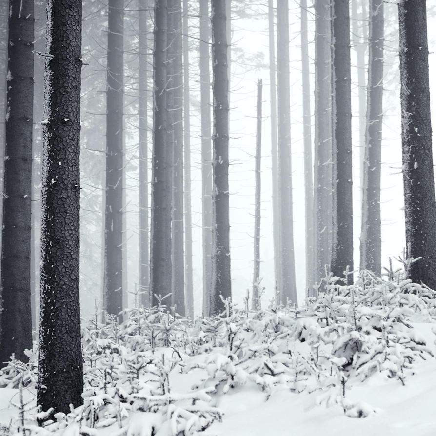 Solitude by alterOFnotion